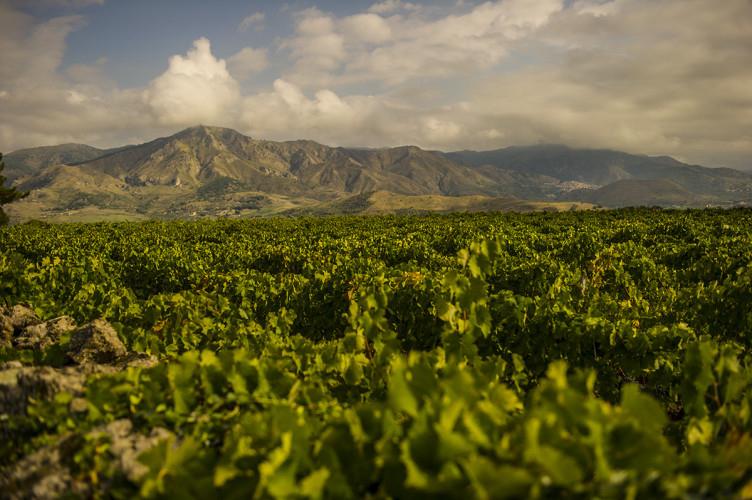 Le vigne dell'azienda Girola Russo a Passopisciaro