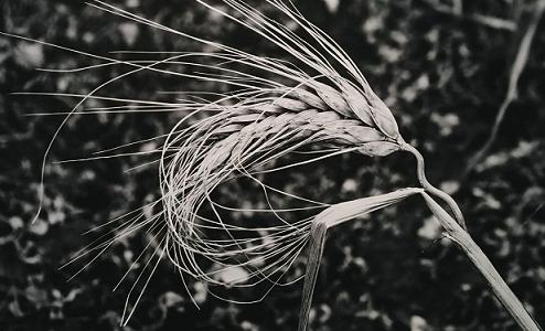 Foto di Eletta Massimino tratta dal libro Libertinia