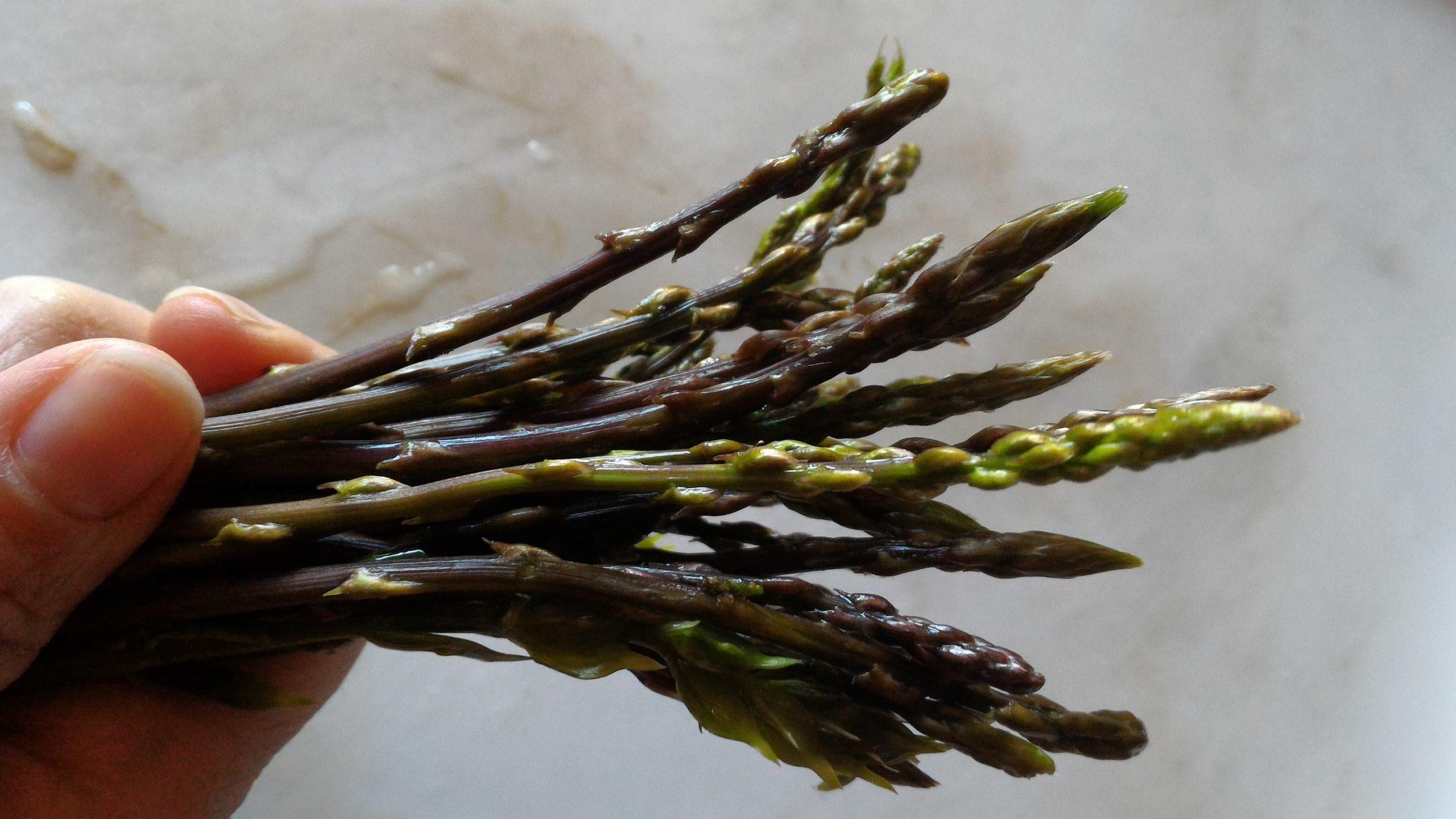 Andare per asparagi selvatici (parte I): la frittata