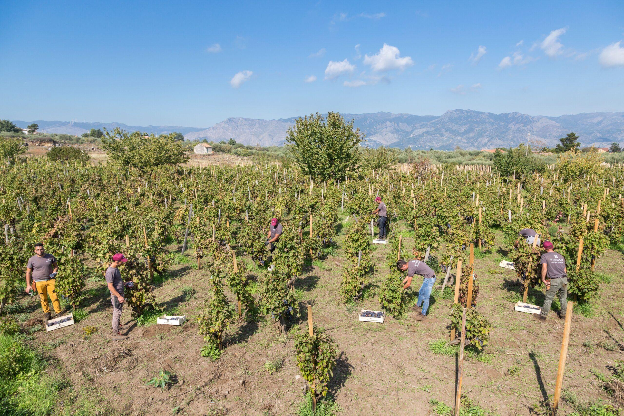 Gambero Rosso premia l'azienda Firriato per la viticoltura sostenibile