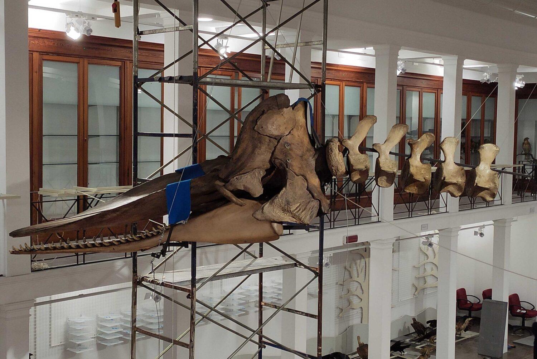 Nuovo allestimento per il Museo di zoologia dell'Università di Catania