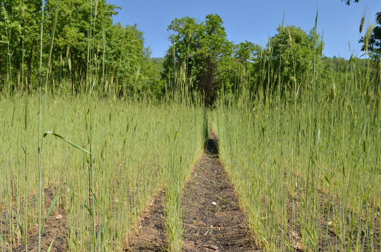 L'Etna culla della biodiversità agroalimentare
